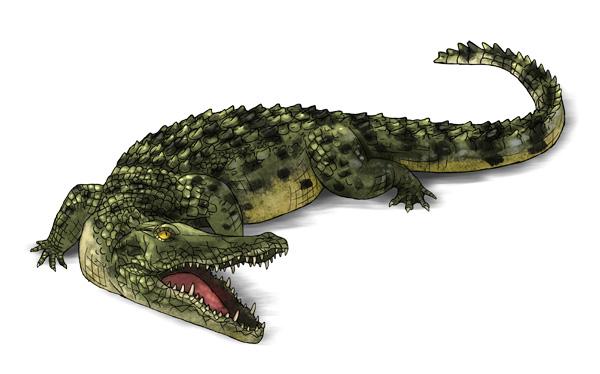 How to draw crocodilians by LadyAway