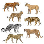 How to draw big cats