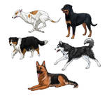 How to draw dogs: tutorial
