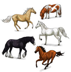 How to draw horses: a complete tutorial by MonikaZagrobelna