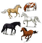 How to draw horses: a complete tutorial