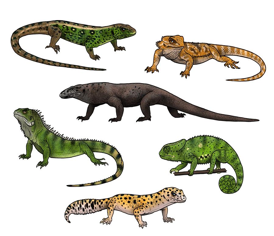 how to draw lizards by monikazagrobelna on deviantart