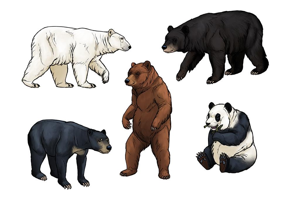 How to draw bears by MonikaZagrobelna on DeviantArt