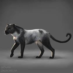 A blue roan cat
