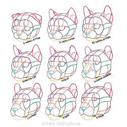Cat heads: size and proportions