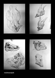 animal anatomy by olbillyboy