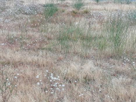 Prairie d'ete