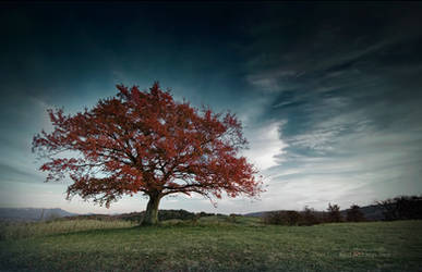 The red autumn tree