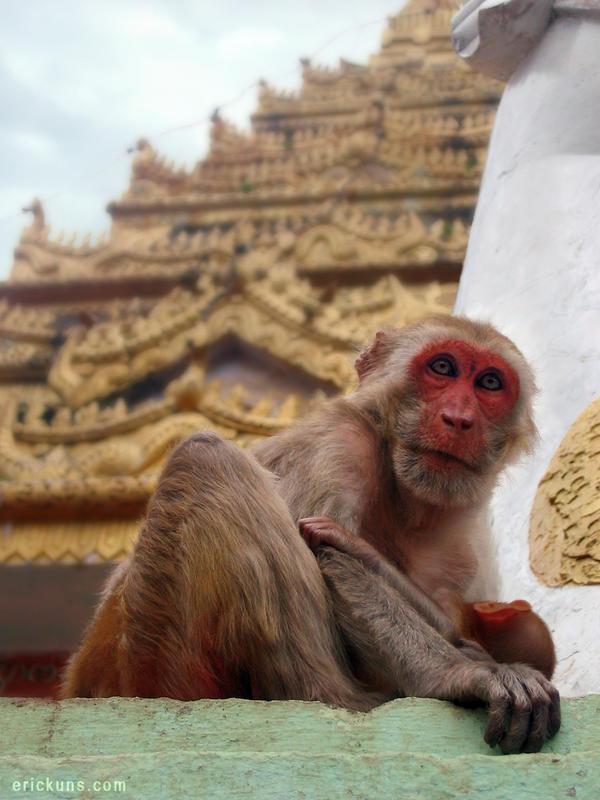 Mount Popa Monkey with baby, Burma by Art-of-Eric-Wayne