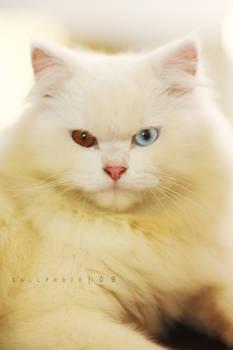 .colors of eyes.