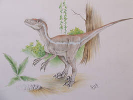 Velociraptor sornaensis by T-PEKC