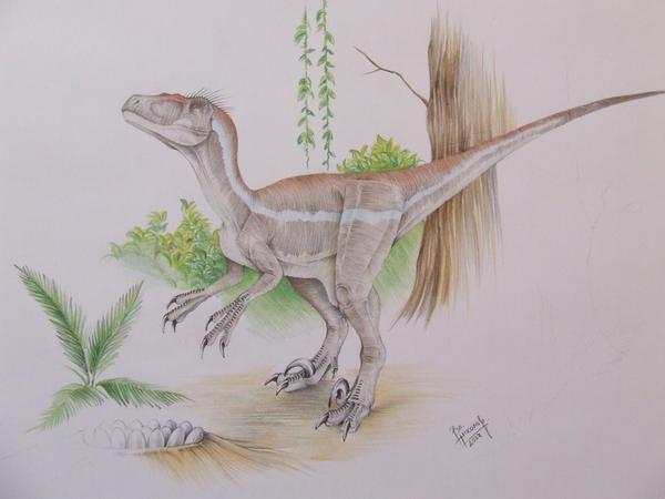 http://fc04.deviantart.net/fs17/i/2007/210/7/b/Velociraptor_sornaensis_by_T_PEKC.jpg