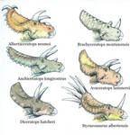 Ceratopsids part 1