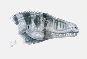 Eoraptor lunensis- head detail by T-PEKC