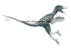 Bambiraptor feinbergorum by T-PEKC
