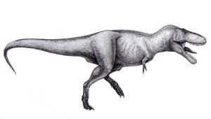 Tyrannosaurus rex- side view
