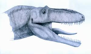Alioramus remotus- head by T-PEKC