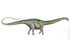 Apatosaurus excelsus by T-PEKC