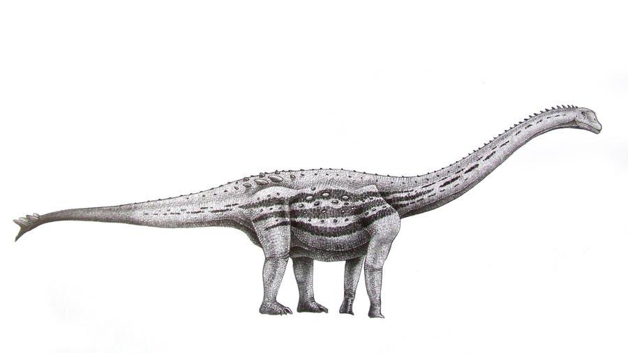 Spinophorosaurus nigerensis