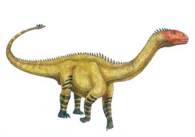 Shunosaurus lii by T-PEKC
