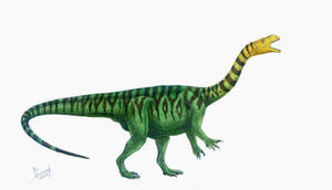 Plateosaurus engelhardti by T-PEKC