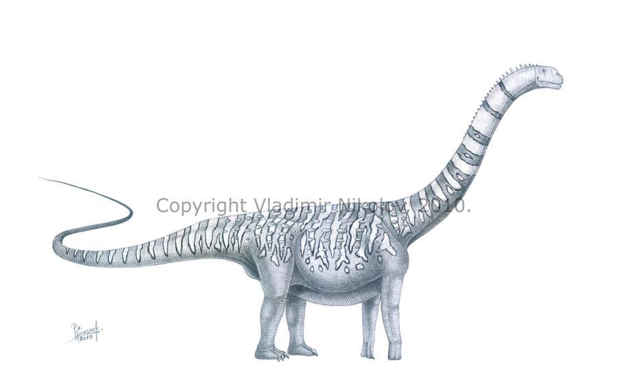 Malawisaurus dixeyi by T-PEKC