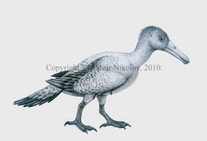 Longipteryx chaoyangensis by T-PEKC