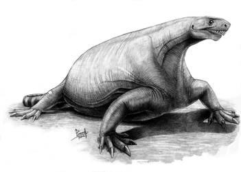 Cotylorhynchus romeri by T-PEKC