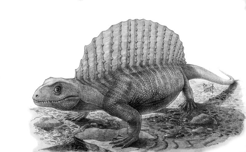 http://fc09.deviantart.net/fs70/i/2012/287/b/5/glaucosaurus_megalops_by_t_pekc-d5hrsjc.jpg