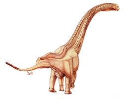 Futalognkosaurus dukei by T-PEKC