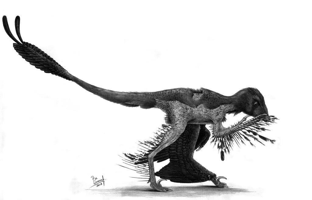 Microraptor gui by T-PEKC