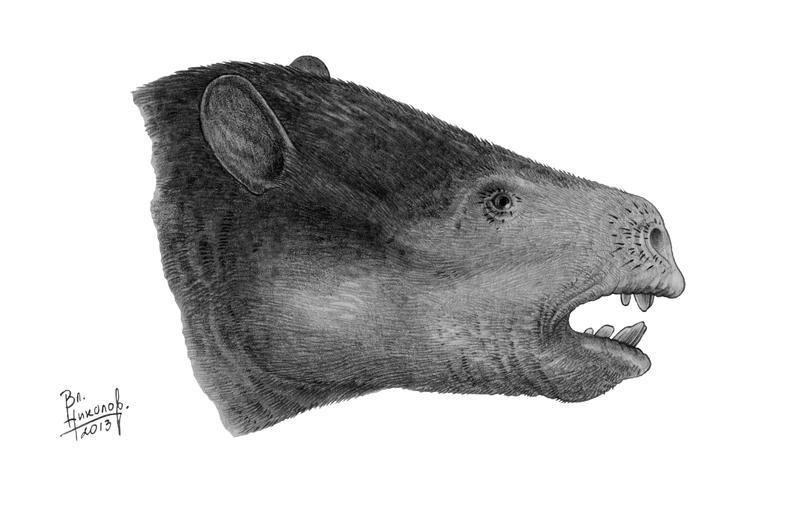 Phosphatherium escuilliei - portrait by T-PEKC on DeviantArt