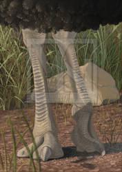Struthio karatheodoris by T-PEKC