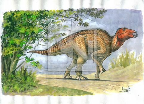 Basal hadrosauroid ornithopod