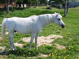 stock unicorn 01 by MalletGirlStock
