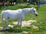 stock unicorn 01