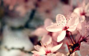 Flower Bomb - - Wallpaper by inkeen