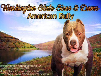 American Bully by BerlinlavsMarie