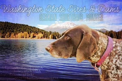German Shorthair Pointer by BerlinlavsMarie