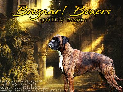 Bazaar Boxers by BerlinlavsMarie