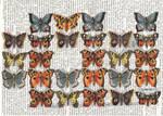 butterflies_diecut_2