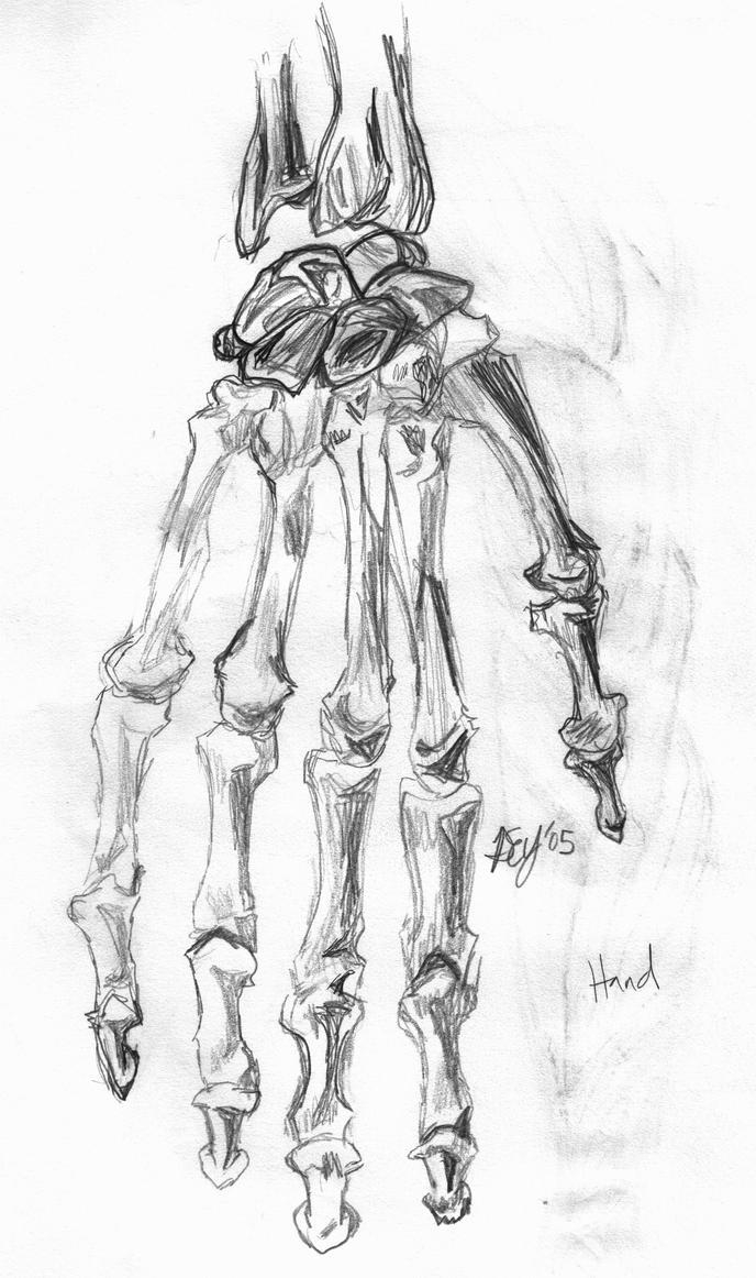 Skeleton Hand Drawing