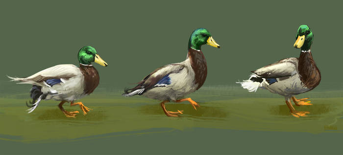 Getting my Ducks in a Row by ShamiesArt