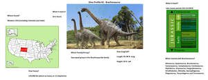Dino profile #2-Brachiosaurus