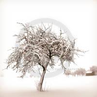 Wintertree by Finvara