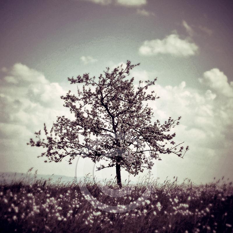 Violet Hill by Finvara