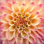 Blossom by Finvara
