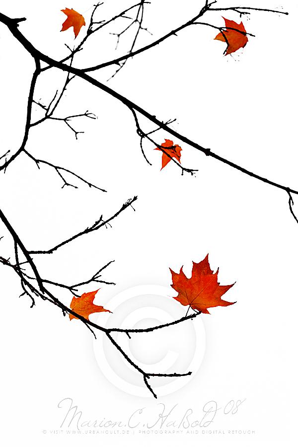 Autumn by Finvara