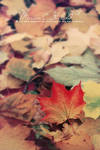 Touched by Autumn