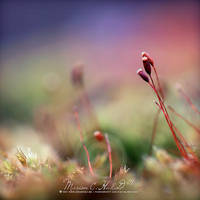 spring is not here yet by Finvara